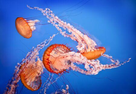 jellyfish Zdjęcie Seryjne
