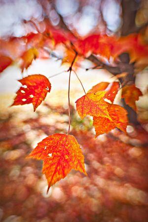 leaf closeup Stok Fotoğraf