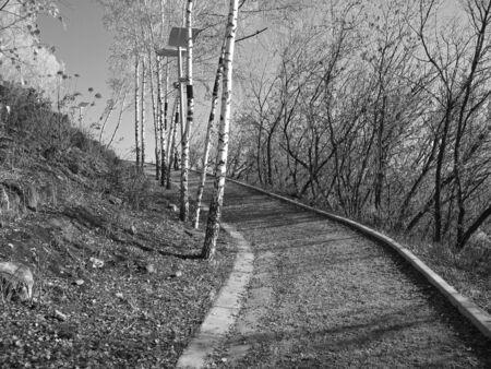 Grey herfst in het stadspark. Stockfoto