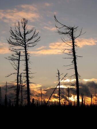lifeless: Sunset in lifeless forest. Autumn. Stock Photo