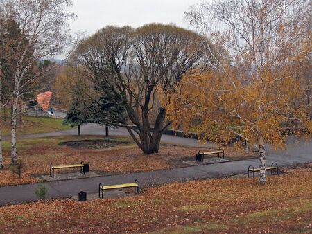 Autumn in the city park. photo