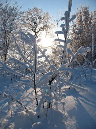 cloud drift: Sun in the winter forest. Stock Photo