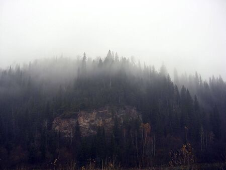 Fog in mountains. Pines on a slope.        photo