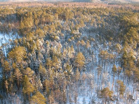 Wild taiga in west Siberia. Aerial view. Frost in sunny day. White silence.