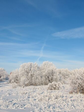 thickets: Silence in the wild winter forest. Stock Photo