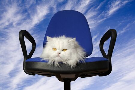 White cat in the armchair Stock Photo - 4043955