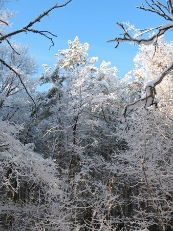 impasse: Travel in the icy silence forest. Sunny day in wild Siberian taiga. Stock Photo