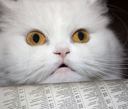 White cat read unexpected news in newspaper . To catch napping photo
