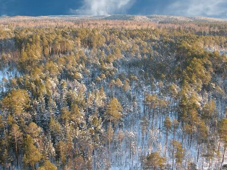high end: Wild taiga in west Siberia. Aerial view. Frost in sunny day. White silence.