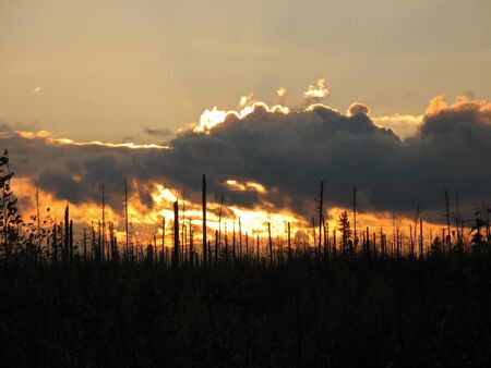 Sunset in lifeless forest. Problem of ecology. photo
