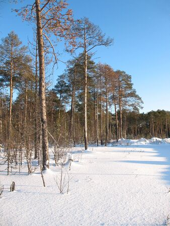 Walk in the icy silence forest. Frost in sunny day. White silence. Stock Photo - 4060079
