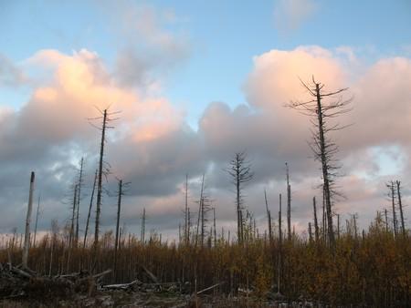 mortale: Tramonto sulla foresta mortale