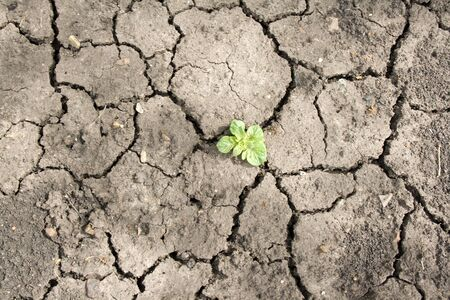 Gedurende een sterke droogte