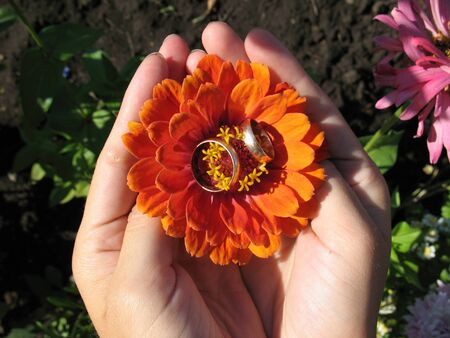 resent: rings on a flower.