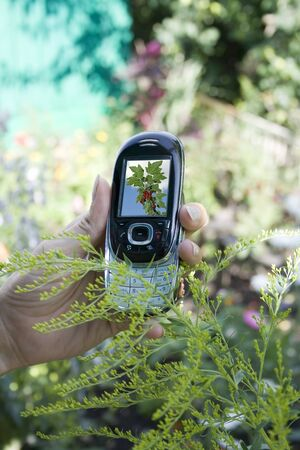 show garden: Mobile phone in the womens hand Stock Photo
