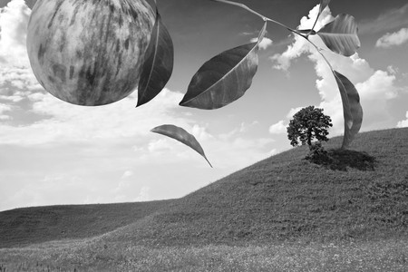 Falling of yellow leaf from apple tree in fruit garden . Black and white photo Stock Photo - 4087510