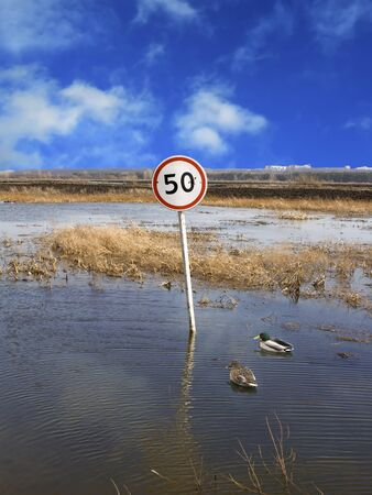 no movement: Limit of speed for wild ducks on a flooded road