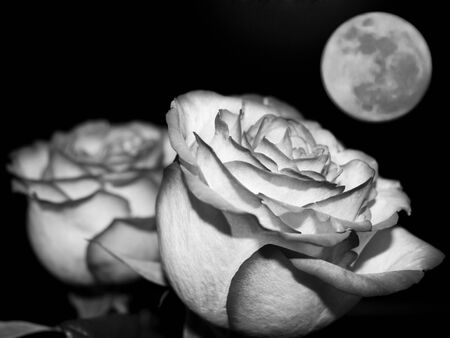 Planet of love - Valentine day event . Romantic beautiful rose on sky background. Black and white photo Stock Photo