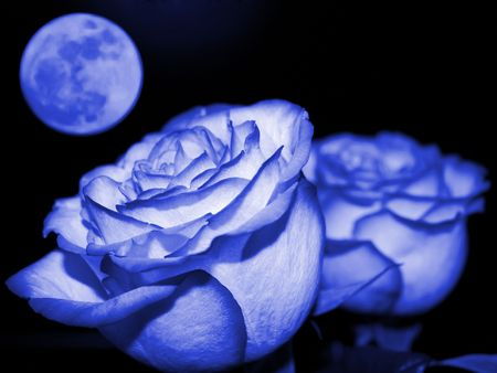 Planet of love - Valentine day event . Romantic beautiful rose on sky background. Colorize in blue