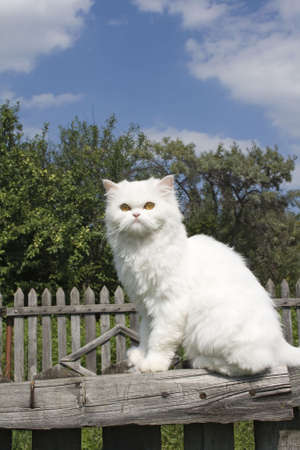 moustached: White cat on a fence