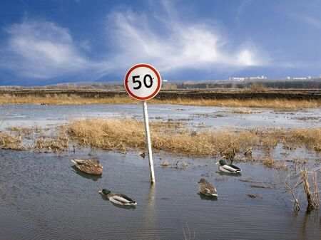 Wild ducks on a flooded road. Speed limit Stock Photo