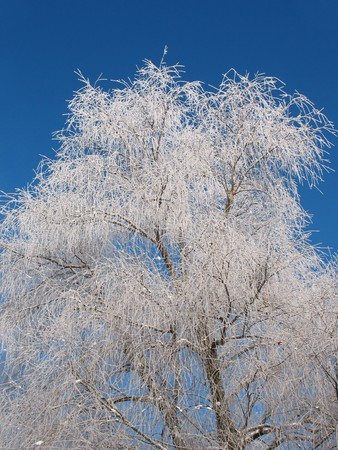 Walk in the icy silence forest. Frost in sunny day. Perfect tree. Stock Photo - 7806955