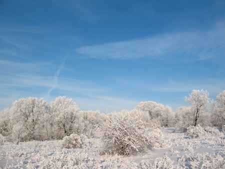 impasse: Silence in the winter forest. White frost.