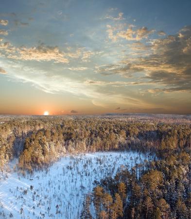 bosque con nieve: Hermoso atardecer en bosque salvaje