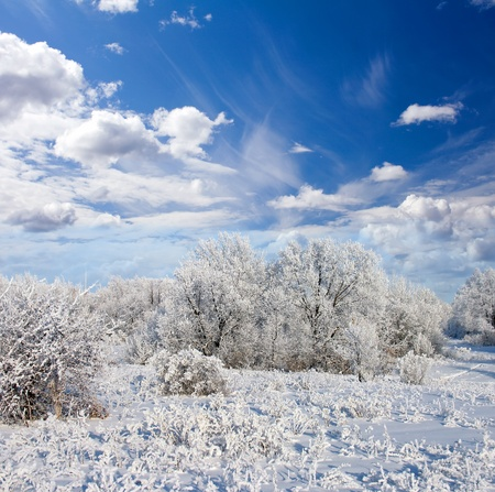 Winter frost in the wild forest. Deep in wilderness area
