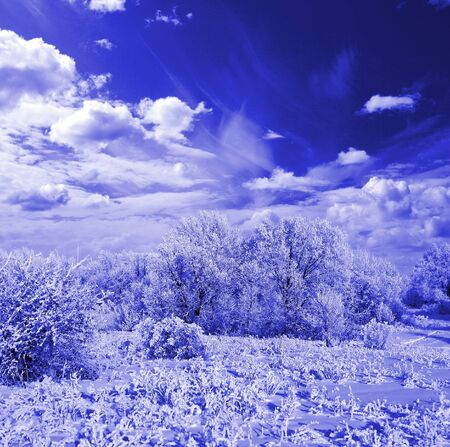 Winter frost in the wild forest. Deep in wilderness area. Colorize in blue photo