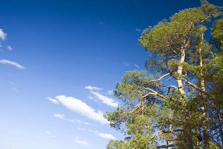 Grren tre and blue sky Stock Photo - 8871941