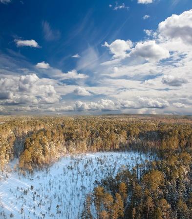 Deep in wild winter forest  photo
