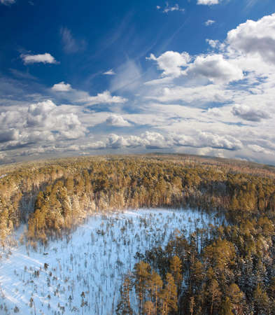 Deep in wild winter forest Panoramic view  photo