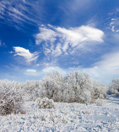 Winter frost in het wild bos. Diep in de wildernis