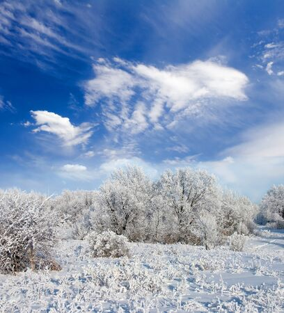 Winter frost in the wild forest. Deep in wilderness Stock Photo - 9203661