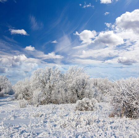 Winter frost in the wild forest. Deep in wilderness area photo