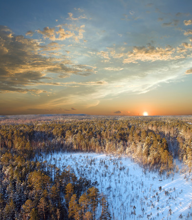 Beautiful sunset in wild pine forest. Winter sky with clouds. Twillight landscape photo