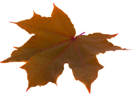 Yellow leaf on white background. Cut out. Studio photo Stock Photo