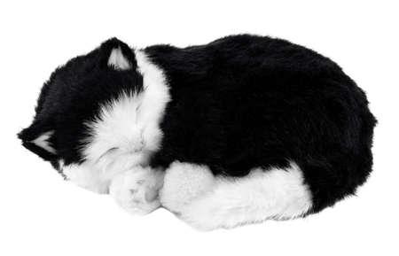 Kitten sleeping on a white background. Black and white photo