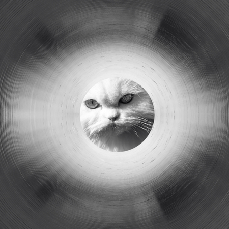 Inside the gas pipeline. White cat in the end of a tunnel. Black and white photo