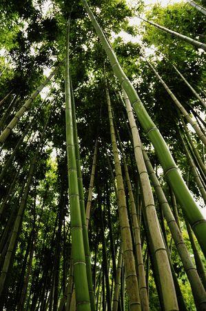 exuberant: Grows the exuberant bamboo grove