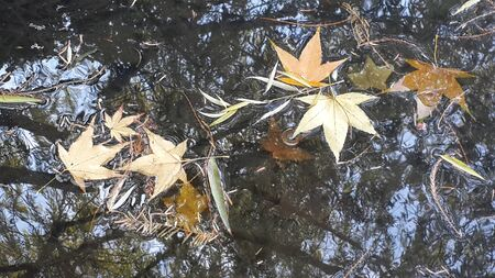 intentionally: Intentionally leaves, water ruthless