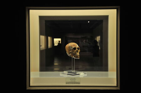 civilization: Shanghai first human skull found: History proves Shanghai civilization up to 6 years Editorial