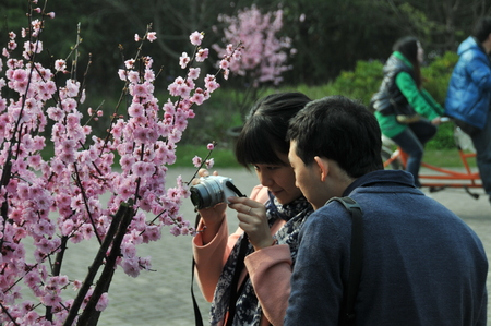 visitors: Plum blossoms, visitors outing
