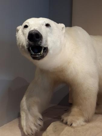 polar environment: Shanghai Museum of natural history