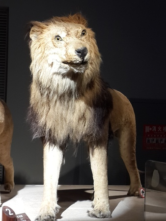 natural history museum: Shanghai Natural History Museum