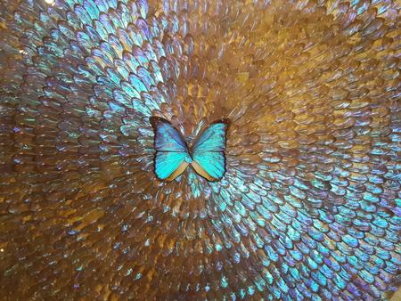 helena: butterfly
