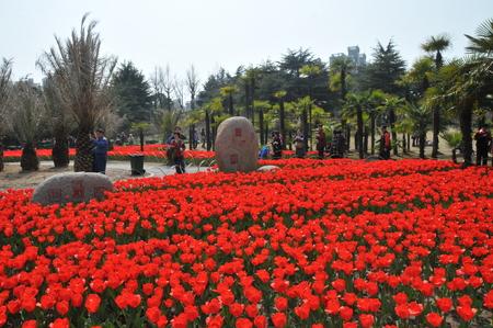 exposition: Tulip flower Exposition Editorial
