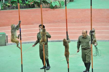 rare animals: Shanghai wild zoo animal show