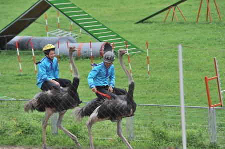 rare animals: Shanghai wild zoo animal shows